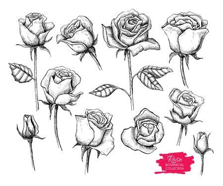 식물을 설정했다. 새겨진 컬렉션입니다. 카드, 배경, 청첩장을 greating에 대 한 좋은