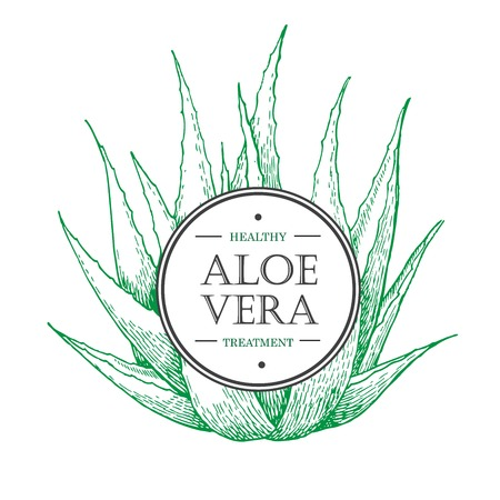 botanical Aloe Vera. Engraved illustration. Lable
