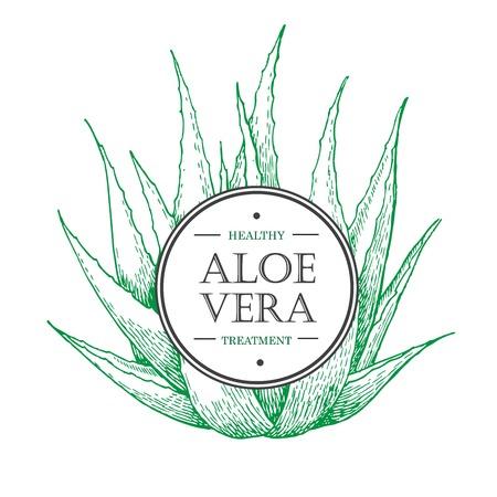 vera: botanical Aloe Vera. Engraved illustration. Lable