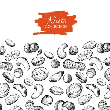 nuts illustration. Engraved. Great for your business promote Ilustração