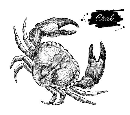 벡터 빈티지 크랩 그리기입니다. 손으로 그린 단색 해산물 그림입니다. 메뉴, 포스터 또는 레이블을 위해 중대 한입니다.