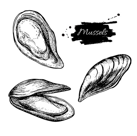 etch: Vector vintage mussel set drawing. Hand drawn monochrome seafood illustration. Great for menu, poster or label.