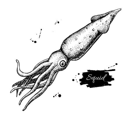 mariscos: Vector de dibujo de calamar de la vendimia. dibujado a mano ilustración en blanco y negro de mariscos. Grande para el menú, carteles o etiquetas.