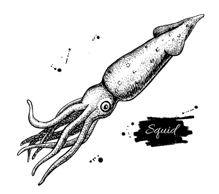 seafood background: Vector vintage squid drawing. Hand drawn monochrome seafood illustration. Great for menu, poster or label. Illustration