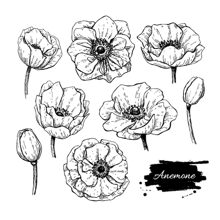 Vector vintage anemone set. Hand drawn illustration. Great for wedding invitations, birthday, valentine's, save the date and greeting cards. Engraved decor element