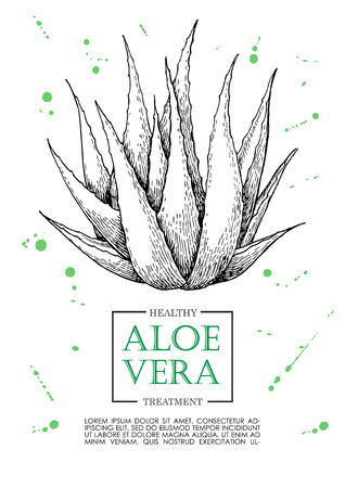 etch: Vector aloe vera hand drawn illustrations. Detailed drawing. Aloe Vera banner, poster, label, brochure template for business promote.