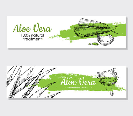 aloe: Vector aloe vera hand drawn illustrations. Detailed drawing. Aloe Vera banner, poster, label, brochure template for business promote.
