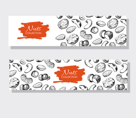 brazil nut: Vector hand drawn nuts banners. Engraved detailed illustrations.