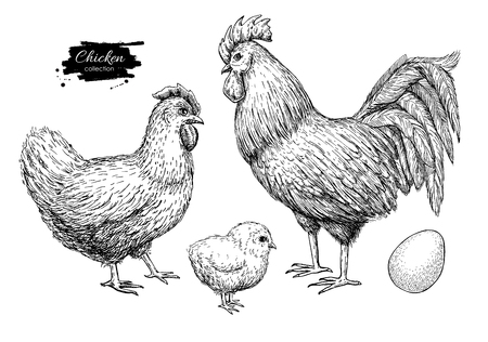 chicken breeding hand drawn set. Engraved Chicken, Roster, baby chick and egg illustrations. Rural natural bird farming. Poultry business.