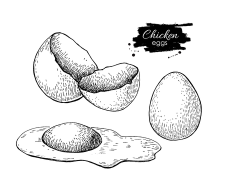 broken eggs: vintage hand drawn scrambled chicken egg. Engraved food illustration. Rural natural bird farming. Poultry business. Illustration