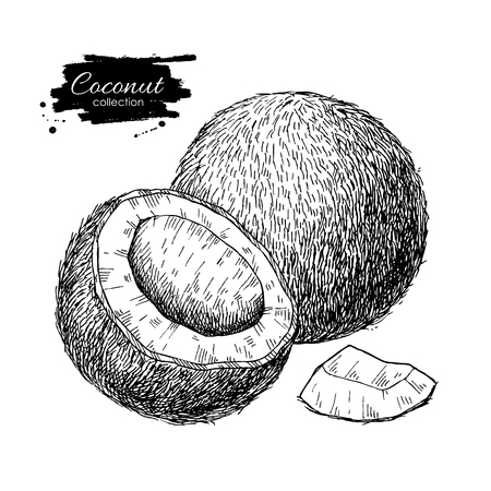 Vector hand drawn coconut.