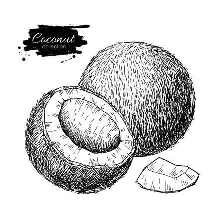 Vector hand getrokken kokosnoot.