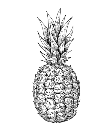 for print: Vector hand drawn pineapple. Tropical summer fruit engraved style illustration. Detailed food drawing. Great for label, poster, print