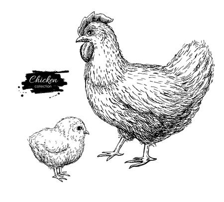 ベクトル ヴィンテージ手には、鶏と赤ちゃんひよこが描画されます。刻まれたイラスト。農業農村の自然鳥。家禽ビジネス。ラベルやポスターに最