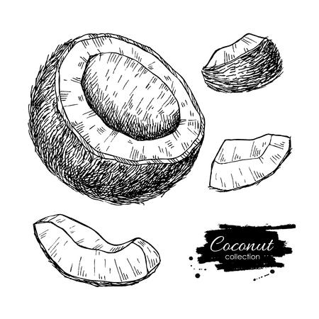 Vector hand drawn coconut set. Illustration
