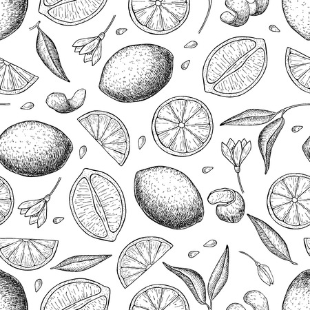ingedient: Vector hand drawn lime and lemon seamless pattern. Illustration