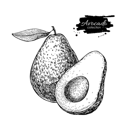 Vector hand drawn avocado and sliced pieces set. Tropical summer fruit engraved style illustration. Detailed avocado food drawing. Great for label, poster, print