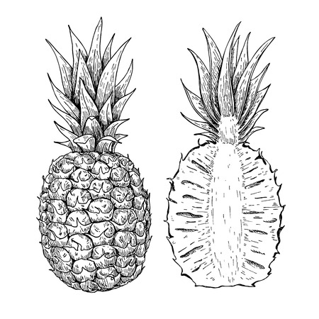 sliced fruit: Vector hand drawn pineapple and sliced pieces set. Tropical summer fruit engraved style illustration. Detailed food drawing. Great for label, poster, print
