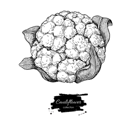 cauliflower: Cauliflower hand drawn vector illustration. Vegetable engraved style illustration. Isolated Cauliflower. Detailed vegetarian food drawing. Farm market product.