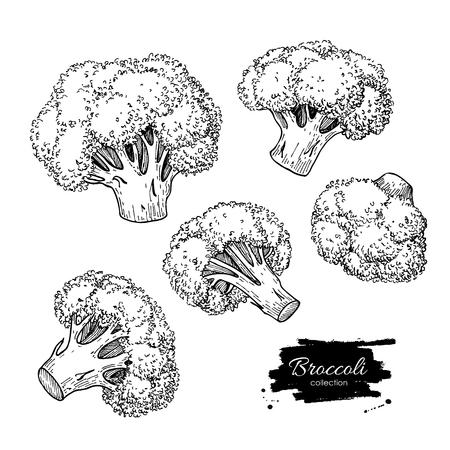 Broccoli illustraties. Plantaardige gegraveerde stijl objecten. Geïsoleerde Broccoli set. Gedetailleerde vegetarisch voedsel tekening. Farm markt product. Vector Illustratie