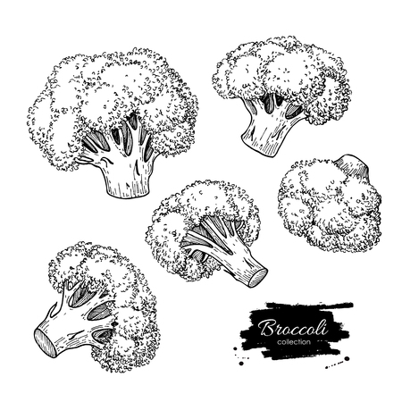 Broccoli illustrations. Vegetable engraved style objects. Isolated Broccoli set. Detailed vegetarian food drawing. Farm market product. Vectores