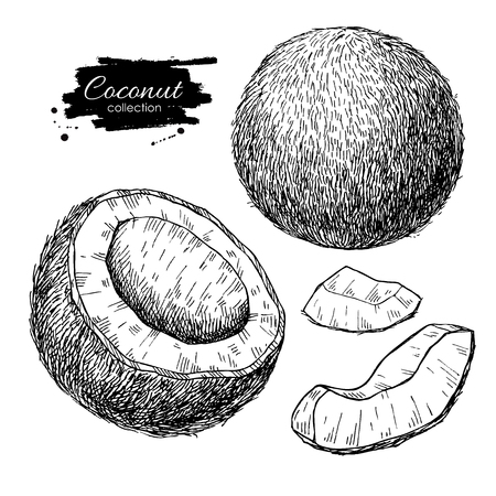 peice: coconut set. Tropical summer fruit engraved style illustrations. Detailed food drawing. Great for label, poster, print
