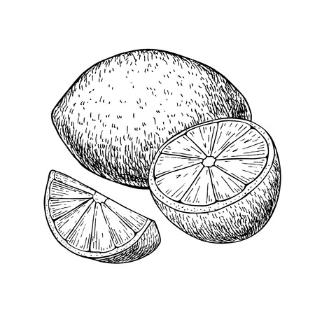 detox: lemon or lime fruit with sliced peaces. Tropical summer fruit engraved style illustration. Detailed citrus drawing. Great for water, juice, detox drink, natural cosmetics Illustration