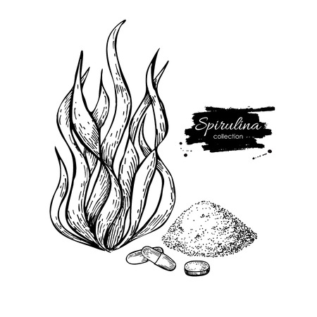Spirulina seaweed powder hand drawn vector. Isolated Spirulina algae, powder and pills drawing on white background. Superfood engraved style illustration. Organic healthy food sketch