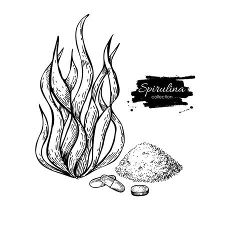 Spirulina zeewier poeder hand getekend vector. Geïsoleerde Spirulina algen, poeder en pillen tekening op een witte achtergrond. Superfood gegraveerde stijl illustratie. Organische gezonde voeding schets
