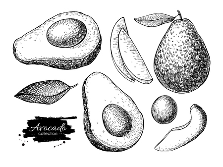 sliced fruit: Vector hand drawn avocado set. Whole avocado, sliced pieces, half, leaf and seed sketch. Tropical summer fruit engraved style illustration. Detailed food drawing. Great for label, poster, print