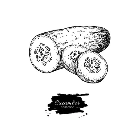 Cucumber hand drawn vector. Isolated cucumber and sliced pieces. Vegetable engraved style illustration. Detailed vegetarian food drawing. Farm market product. Ilustração