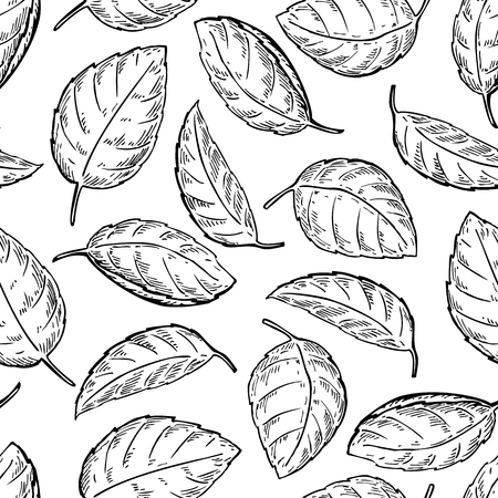 spicy plant: Mint vector drawing seamless pattern. Isolated mint plant and leaves. Herbal engraved style background. Detailed organic product sketch. Cooking spicy ingredient Illustration