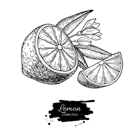 detox: Vector hand drawn lemon or lime fruit with flower and leaf on branch. Tropical summer fruit engraved style illustration. Detailed citrus drawing. Great for water, juice, detox drink, natural cosmetics Illustration