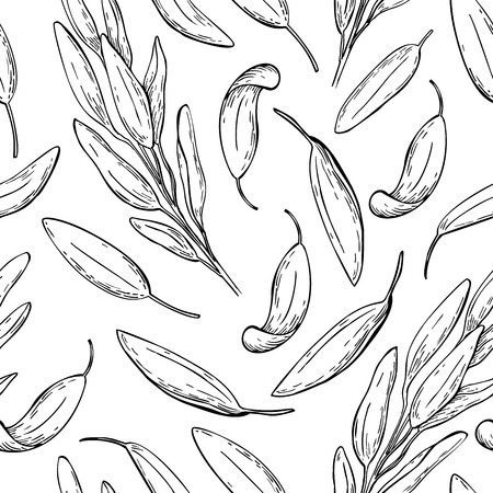 spicy plant: Sage vector drawing seamless pattern. Isolated sage plant with leaves. Herbal engraved style background. Detailed organic product sketch. Cooking spicy ingredient