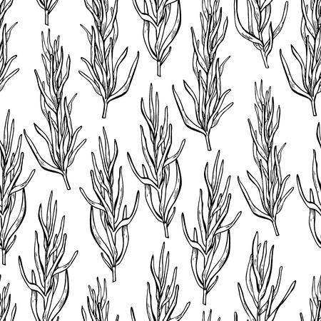 spicy plant: Rosemary vector drawing seamless pattern. Isolated Rosemary plant with leaves. Herbal engraved style illustration. Detailed organic product sketch. Cooking spicy ingredient Illustration