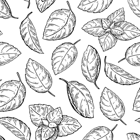 isolated ingredient: Mint vector drawing seamless pattern. Isolated mint plant and leaves. Herbal engraved style background. Detailed organic product sketch. Cooking spicy ingredient Illustration