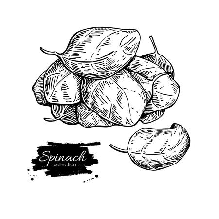 Spinazie bladeren hand getrokken vector heap. Geïsoleerde Spinazie bladeren tekening op een witte achtergrond. Plantaardige gegraveerde stijl illustratie. Gedetailleerde botanische tekening. Farm markt product
