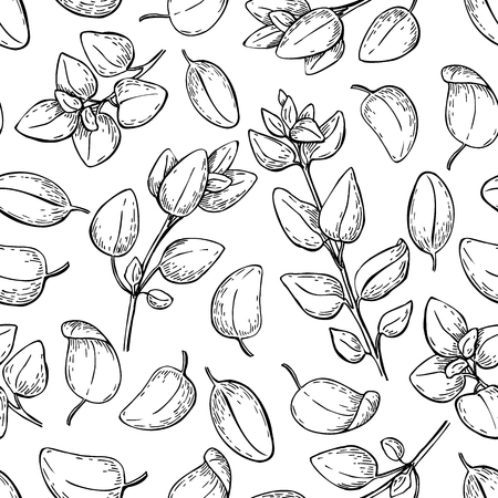 spicy plant: Oregano vector drawing. Seamless pattern. Isolated Oregano plant with leaves. Herbal engraved style background. Detailed organic product sketch. Cooking spicy ingredient Illustration