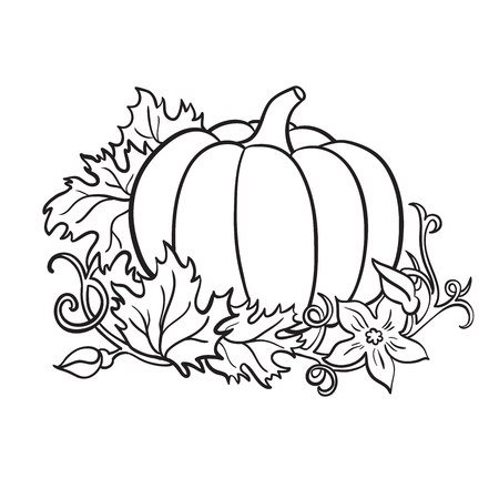 Pumpkin vector drawing. Isolated outline  vegetable with leaves and flower on branch. Hand drawn harvest illustration.