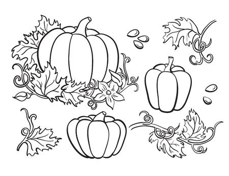 pumpkin seeds: Pumpkin vector drawing set. Isolated outline  vegetable, plant, leaves, flower and seeds. Hand drawn harvest illustration. Illustration