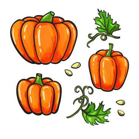 pumpkin seeds: Pumpkin vector drawing set. Isolated hand drawn vegetable, plant, leaves and seeds. Artistic  harvest illustration. Illustration