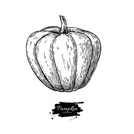 etch: Pumpkin vector drawing. Isolated hand drawn object. Vegetable engraved style illustration. Detailed vegetarian food sketch. Farm market product. Illustration
