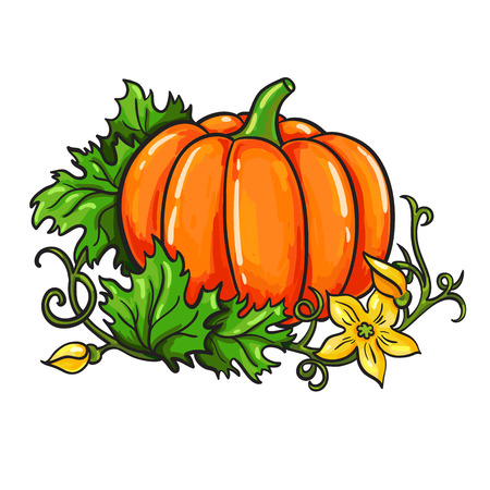 Pumpkin vector drawing. Isolated cartoon vegetable with leaves and flower on branch. Hand drawn harvest illustration.