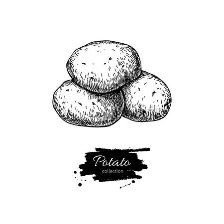 Kartoffel-Vektor-Zeichenprogramm. Isolierte Kartoffeln Haufen. Gemüse eingraviert Stil Abbildung. Detaillierte vegetarische Kost Skizze. Farm Marktprodukt.