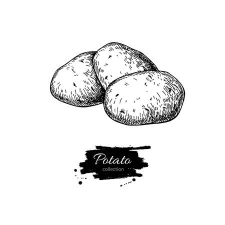 Potato vector tekening. Geïsoleerde aardappelen hoop. Plantaardige gegraveerde stijl illustratie. Gedetailleerde vegetarisch voedsel schets. Farm markt product. Stock Illustratie