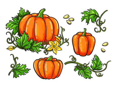 Pumpkin vector drawing set. Isolated hand drawn vegetable, plant, leaves and seeds. Artistic harvest illustration.