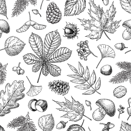가을 잎, 열매, 전나무 콘, 견과류, 버섯, 도토리와 원활한 벡터 패턴입니다. 자세한 숲 식물 배경입니다. 빈티지 가을 계절 장식. 떡갈 나무, 단풍 나무, 일러스트