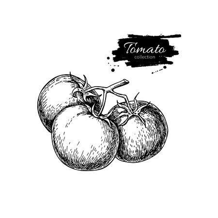 Tomaat vector tekening. Geïsoleerde tomaten op tak. Plantaardige gegraveerde stijl illustratie. Gedetailleerde vegetarisch voedsel schets. Farm markt product.