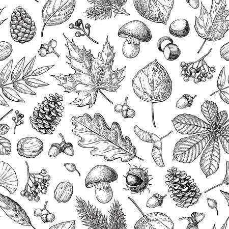Modelo del otoño de vectores sin fisuras con las hojas, bayas, piñas, nueces, hongos y bellotas. bosque detallada fondo botánico. caída de la vendimia decoración de temporada. Roble, arce, dibujo de hoja de castaño.