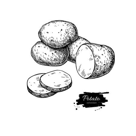 Kartoffel-Vektor-Zeichenprogramm. Isolierte Kartoffeln Haufen und in Scheiben geschnitten Stück. Gemüse eingraviert Stil Abbildung. Detaillierte vegetarische Kost Skizze. Farm Marktprodukt.